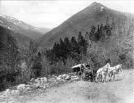 Black and white image of horse drawn carriage going up mountain