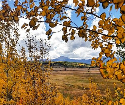 Yellow aspen leaves with mountains in the background
